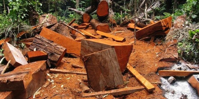 La deforestación está acabando con regiones enteras de la Amazonia, lo que pone en riesgo la vida de sus habitantes. Foto: EFE