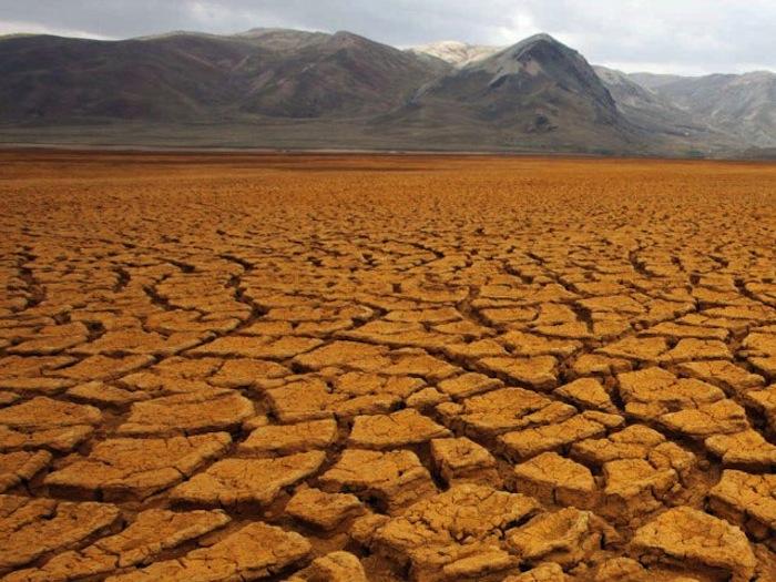 Muchos estiman que debido al cambio climático los bosques tropicales se desertificarán, pero puede que no sea exactamente así. Foto: EFE