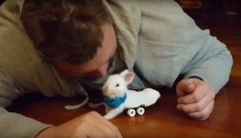 conejo con ruedas