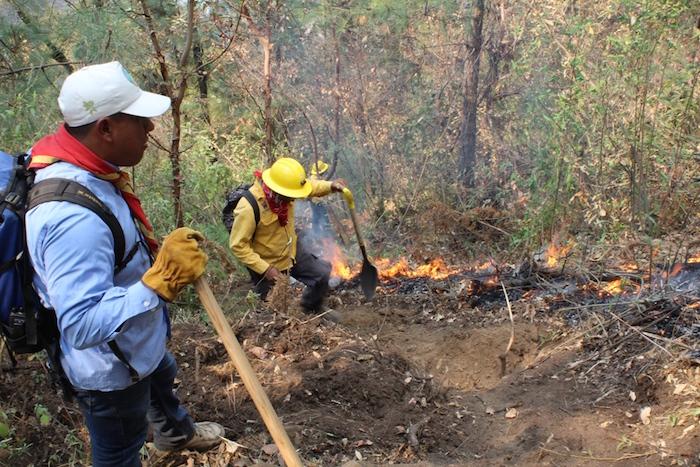 Foto: Comisión Nacional Forestal.
