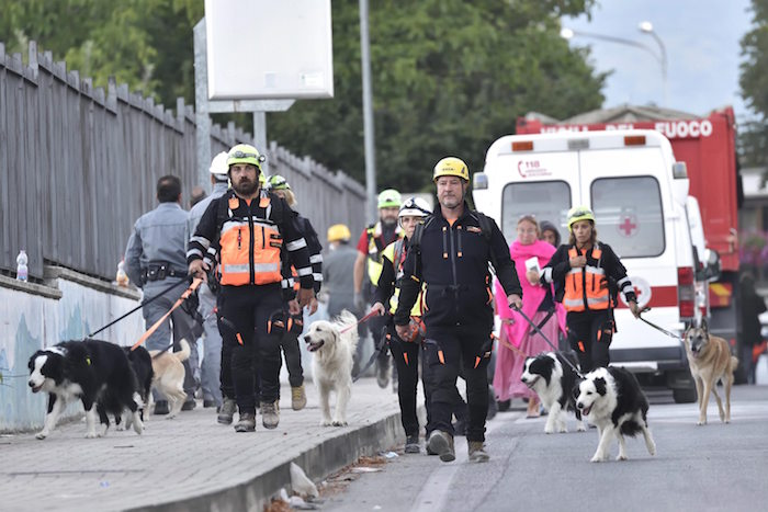 Miembros de los servicios de rescate y perros rastreadores llegan para ayudar en la búsqueda de víctimas. Foto: efe
