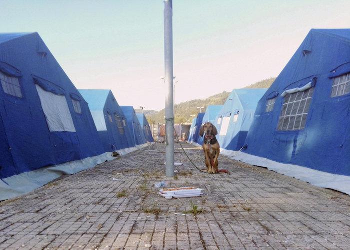 Un perro atado a una farola en el campamento de Arquata del Tronto, uno de los municipios más devastados. Foto: EFE