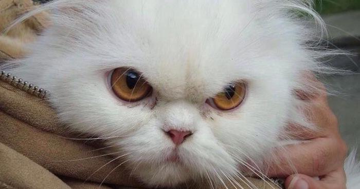 Gato enojado. Foto: susana_segura