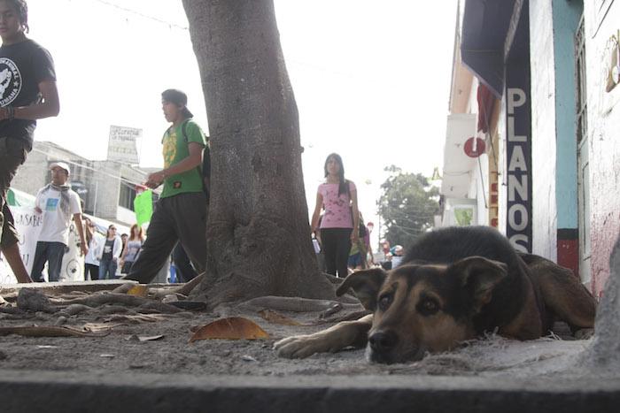 El proyecto para la Constitución de la Ciudad de México contempla una propuesta para la protección animal que, de acuerdo con organizaciones civiles, no garantizan por completo el derecho animal. Foto: Cuartoscuro