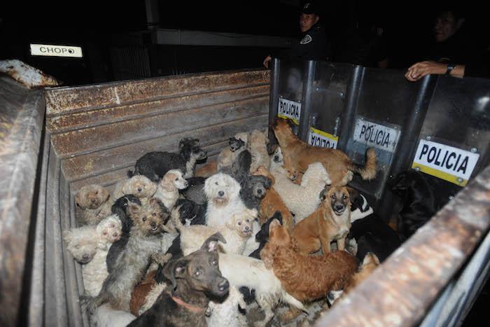 La Ley de Protección a los Animales se encuentra vigente en la Ciudad de México desde 2002, con reformas aprobadas en 2015. Foto: Cuartoscuro