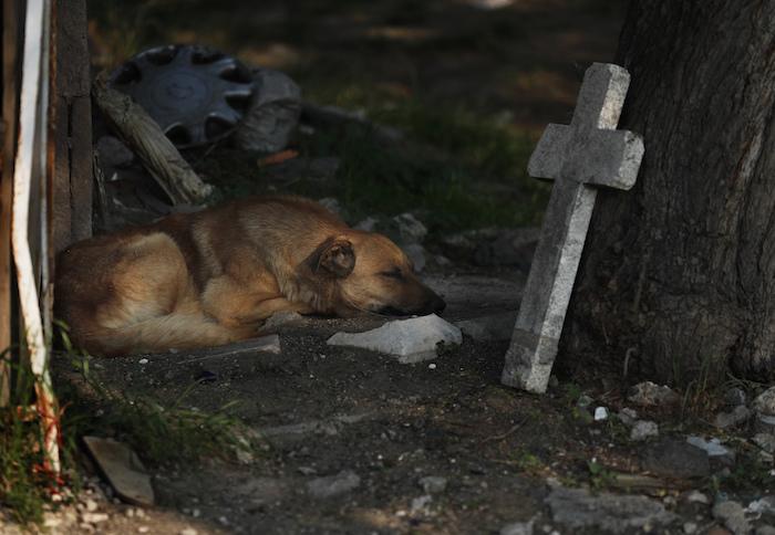 Un perro callejero duerme entre las tumbas en el Panteón San Nicolás Tolentino mientras los trabajadores hacen espacio para más entierros durante la pandemia de COVID-19 en la Alcaldía Iztapalapa en Ciudad de México el miércoles 27 de mayo de 2020.