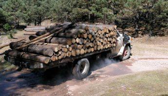 Así dominaron los carteles la tala ilegal en Mexico