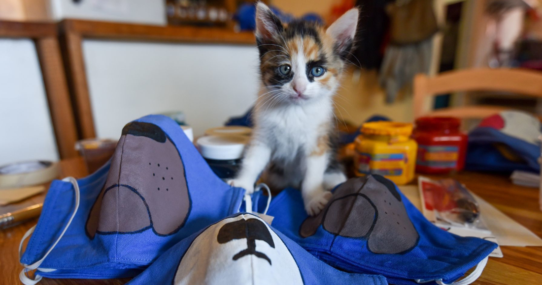 befunky collage 1 22 - Los gatos que duermen con sus dueños pueden contraer COVID: estudio