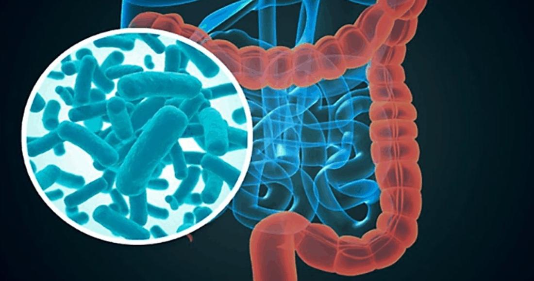 befunky collage 2 8 - La microbiota intestinal depende en gran medida de la dieta que se sigue, afirma nuevo estudio