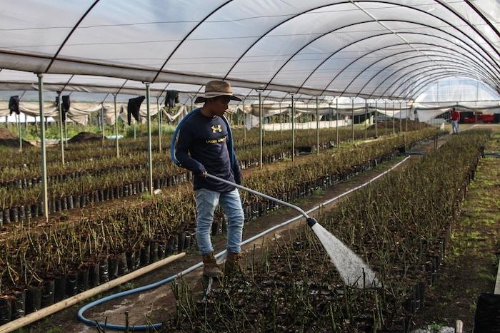 nochebuena riego - Empresas riegan el agua del país como quieren. La Conagua exige nueva Ley que cerrará la llave