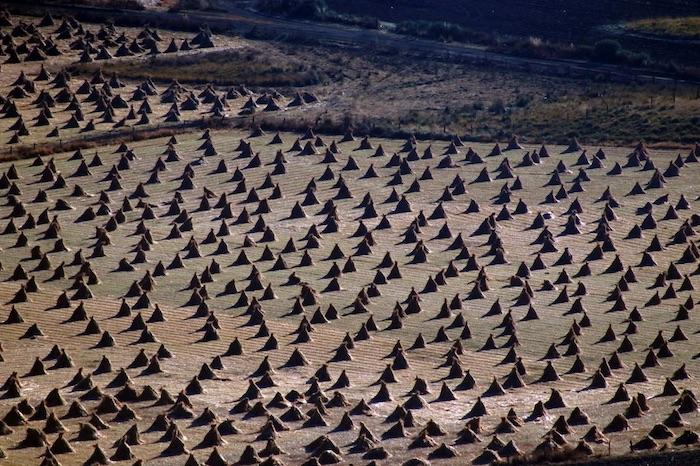 cultivo sequia - Los dueños de México son además dueños del agua: Kimberly, Femsa, Azteca, Bachoco, Herdez, minas…