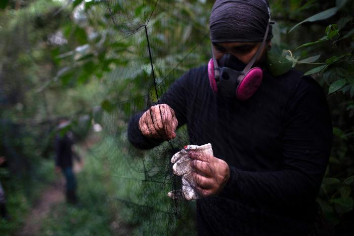 se 0301 15 - ¿Los murciélagos dan pistas para prevenir otra pandemia? En Brasil, científicos estudian la situación