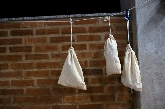 se 0301 23 - ¿Los murciélagos dan pistas para prevenir otra pandemia? En Brasil, científicos estudian la situación