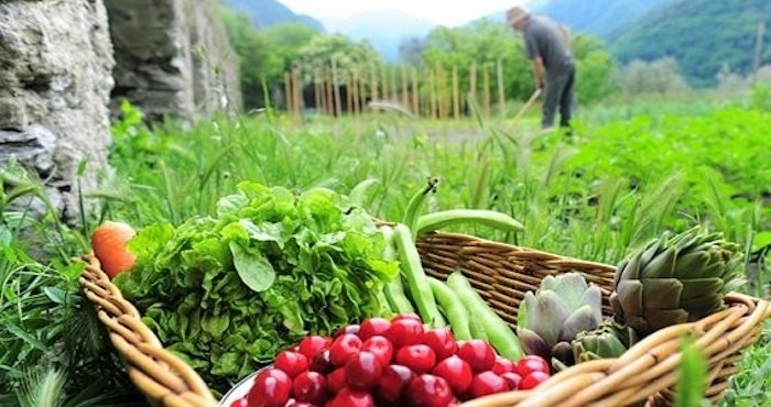 """""""Estados Unidos y la Unión Europea bloquean aspectos fundamentales en las directrices de Naciones Unidas sobre sistemas alimentarios, fundamentales para la sustentabilidad del planeta y la salud de la población global""""."""