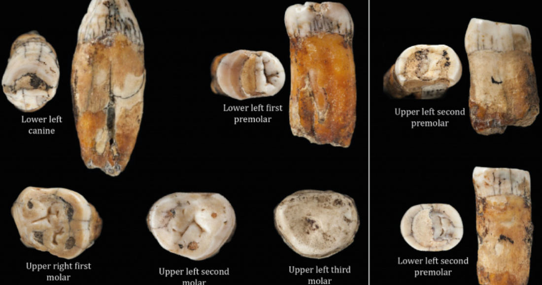 se 0202 19 - ¿Qué causó la extinción de los neandertales? La inversión de polos geomagnéticos, sugiere estudio