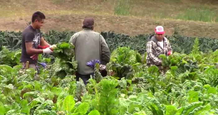 Agricultura campesina.