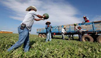trabajadores-agricolas