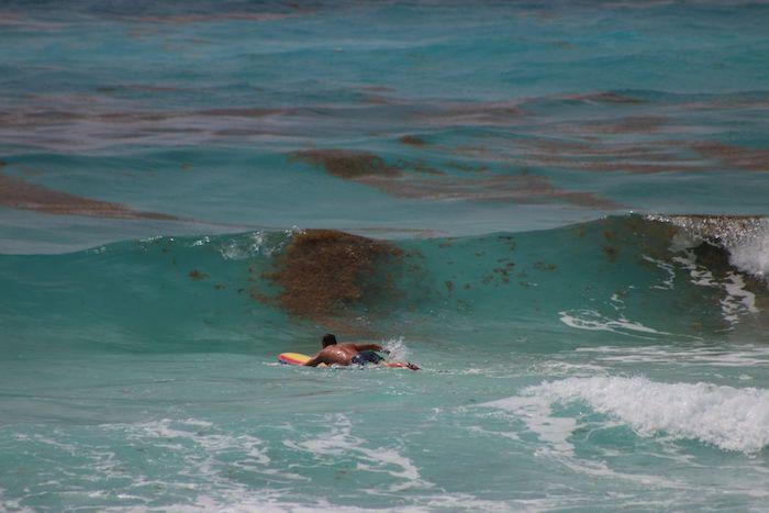 El pasado 26 de mayo, trabajadores de limpieza retiran el sargazo que ha llegado a la costa de Playa Delfines, Quintana Roo.