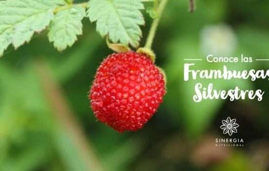 Conoce las Frambuesas Silvestres