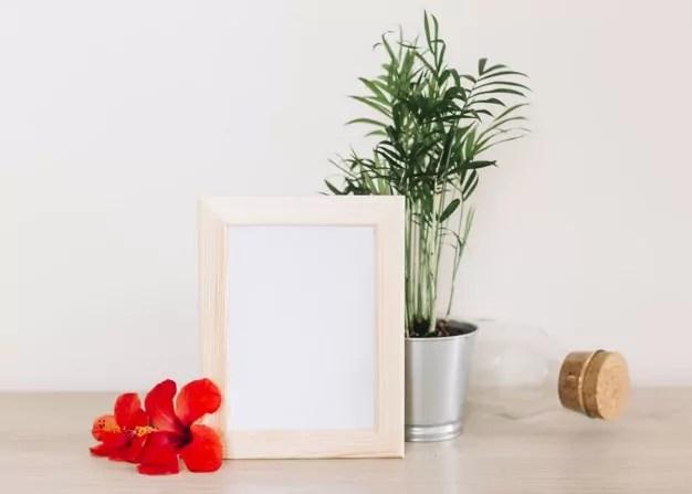 tanaman indoor mini