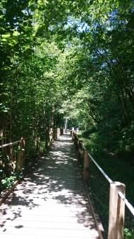 Reserva de Muniellos, sendero accesible
