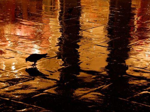 Rainy Friday Musings...