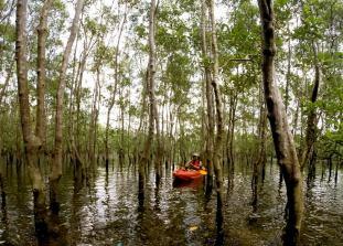 Mandai Mangroves LKP