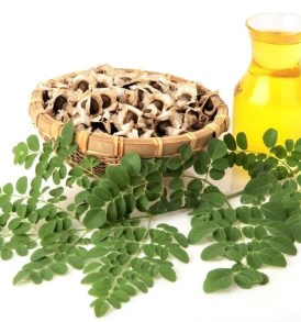Moringa Oil (Virgin Organic)
