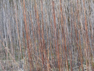 Wald_Struktur+Textur_11