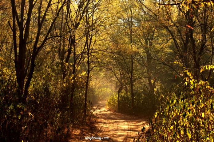 Road Less Travelled