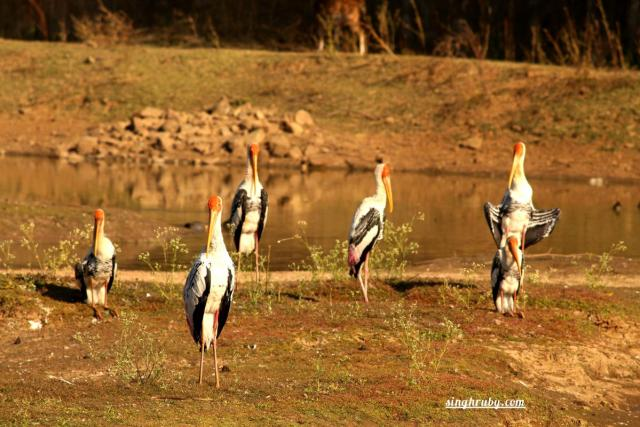 Beautiful birds at Sariska Tiger Reserve