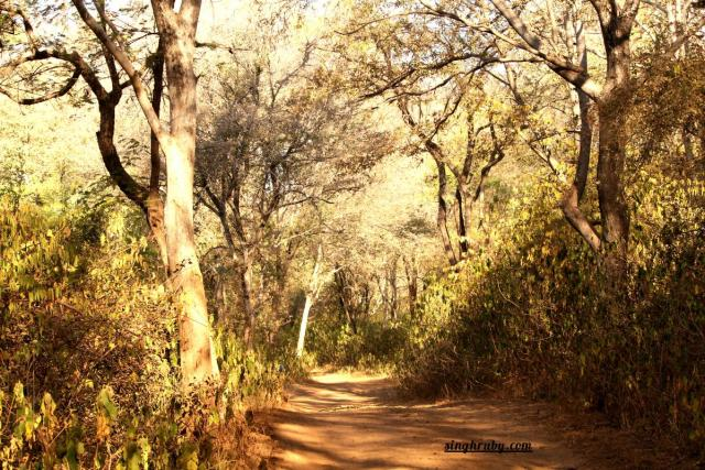 Into the Sariska Tiger Reserve