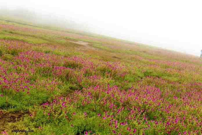 the-wider-view-of-kaas-plateau