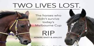 two-horses-admire-ratki-dead-melbourne-cup-day