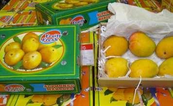 indian mangoes export australia
