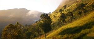 haiti coffee mountain