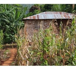 Haiti's coffee of the year Tete Source