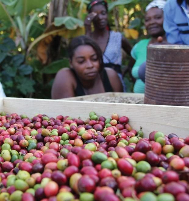 Haiti's Farmers want jobs, not handouts
