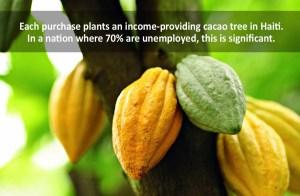 cacao from Haiti