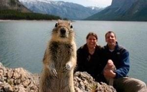 canadian-squirrels-photobomb