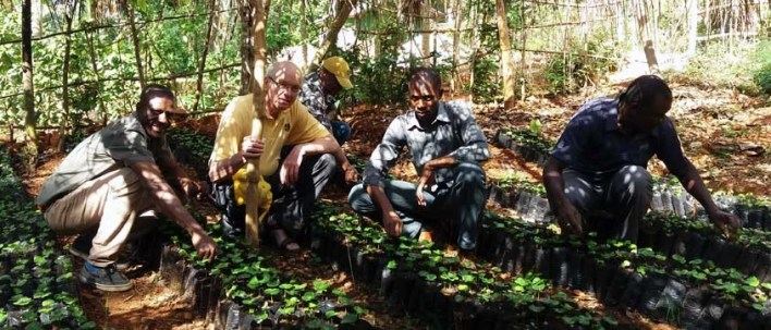 Haitian coffee farmers, Singing Rooster nonprofit