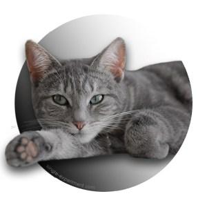 chat célibat