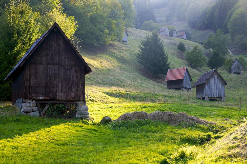 Single schwarzwald