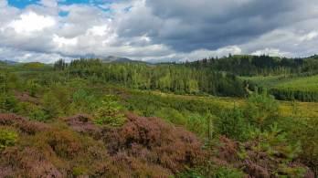 Im Aberfoyle Forestpark in den Südlichen Highlands