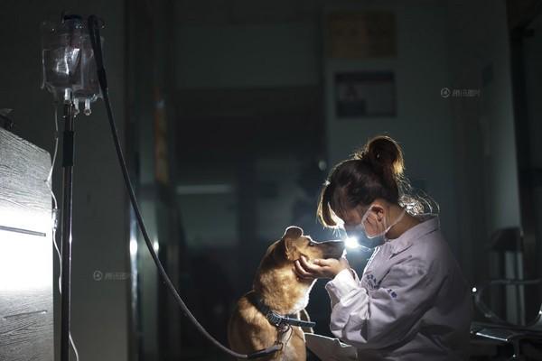 Xiao Bai, hộ sỹ tại bệnh viện cho vật nuôi