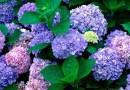 Đặt tên con theo phong thuỷ các loài hoa
