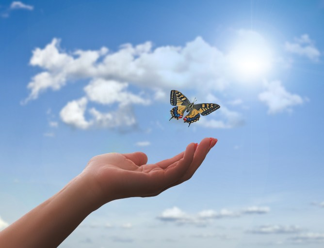 a hand with a butterfly flying above it