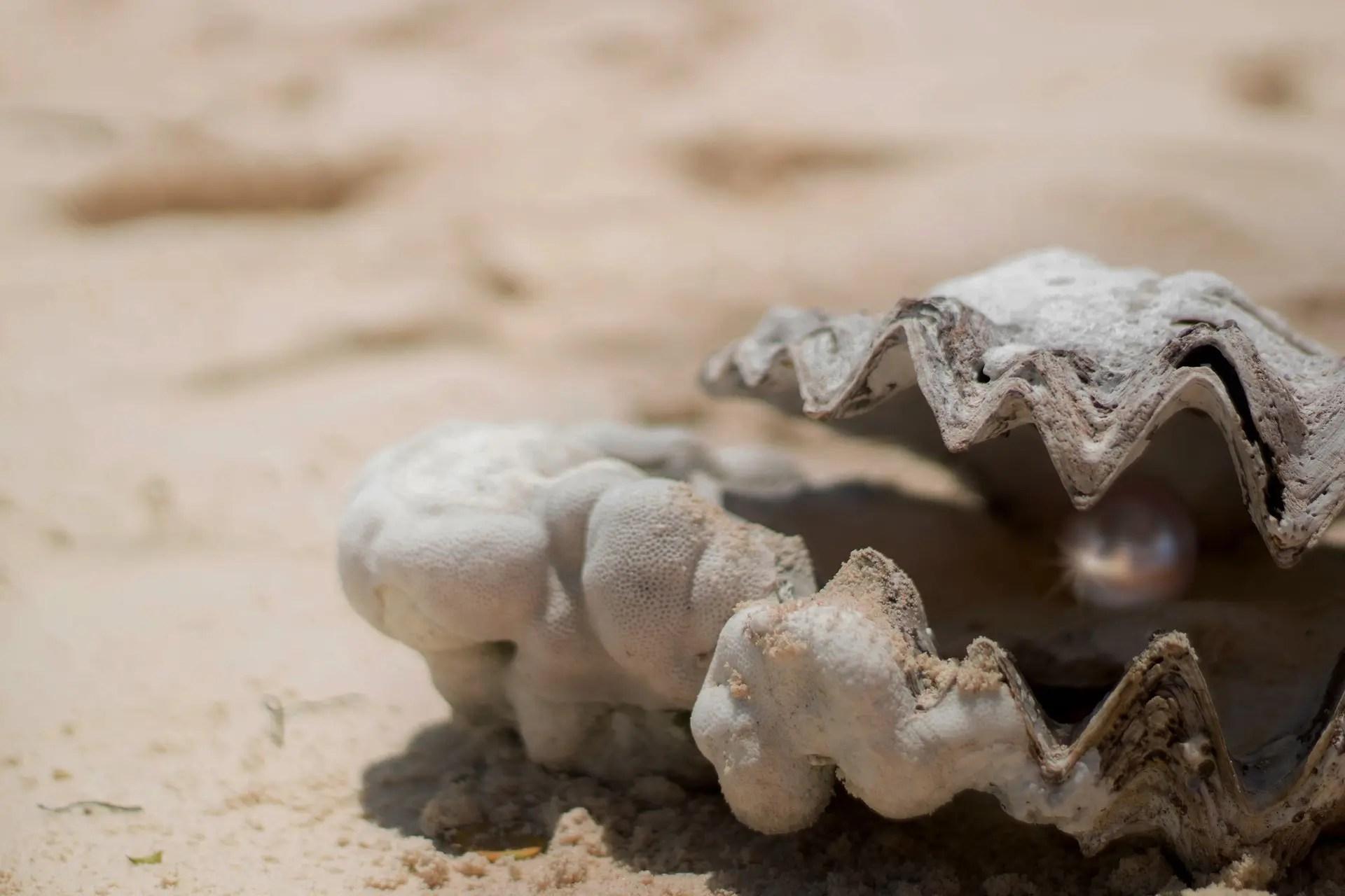 pearl inside shell