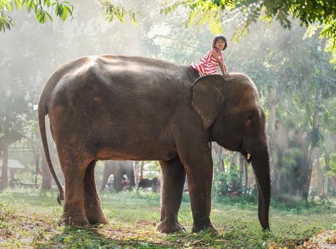 Child on an elephant