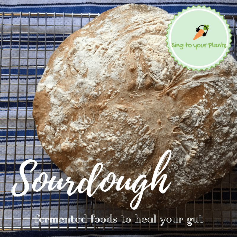 Sourdough – Bread that Heals Your Gut